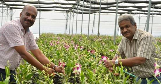 India Imports 80% of Its Orchids. Meet the Telangana Farmer Changing This