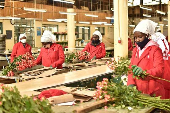 Kenya is the world's third-largest exporter of cut flowers.
