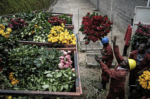 Rough cut: Flowers are dumped at the Bliss Flora farm in Nakuru, Kenya, in March after exports to Europe, Australia, Russia, China and Japan were stopped due to the Covid-19 pandemic. Picture: Gallo Images/AFP/Yasuyoshi Chiba